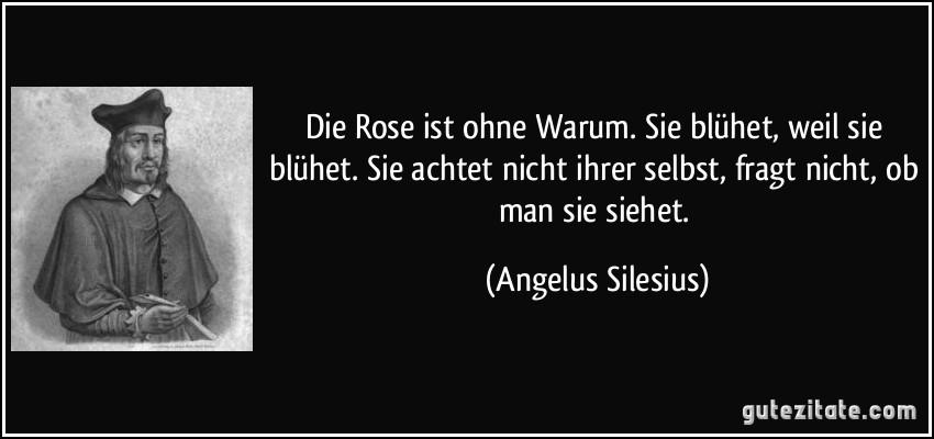 Die Rose ist ohne Warum. Sie blühet, weil sie blühet. Sie achtet nicht ihrer selbst, fragt nicht, ob man sie siehet. (Angelus Silesius)
